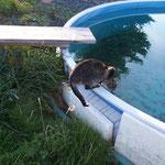 Oktober 2006 - Lucy hielt dich gern am Pool auf ...