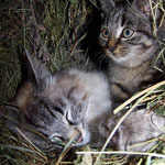 Mama liegt im Heu mit dem ganz kleinen und dem Frechdachs ...