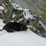 Der Mischlingshund ist kaum zu bremsen, er will in den Schnee ...