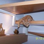 31.12.2003 - Und ein beliebtes Fotoobjekt ist immer unser Kater Felix ...