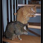 Dezember 2009 - Synchronputzen auf der Treppe ...