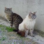 Katzenliebe ...