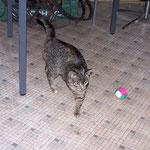 15.04.2006 - Lucy spielt auch sehr gerne mit den Bällchen ...
