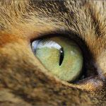 Das Auge unserer Prinzessin ...