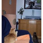 Januar 2010 - Wir schauen das Urlaubsvideo von unseren Dosis an ...