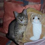 06.08.2007 - Nur wenig größer, als die Kuschelkisen-Katze ...
