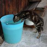 Auch er hat Durst ...