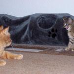 06.08.2007 - Jetzt macht sie auch noch einen Katzenbuckel zu mir ...