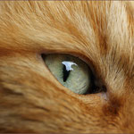 Das Auge vom Kater ...