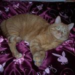10.03.2007 - In Eva's Bett bin ich der Play-Kater ...