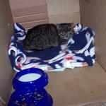 05.02.2006 - Wir haben ihr einen Karton neben der Heizung mit Decken zurecht gemacht ...