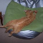 06.07.2004 - Dieser Sitzsack ist wie für mich geschaffen ...