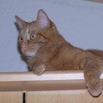 18.05.2004 - Hier kommt keiner an mich ran, der Schrank ist 2,40 m hoch ...