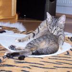 29.09.2007 - Auf dem Tigerfell ist ein schöner Platz zum putzen ...