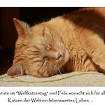 Weltkatzentag ...