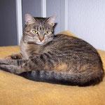 06.06.2008 - Gerade ist Kessy 1 Jahr alt geworden ...
