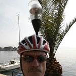 Palmen, überall riesig große Palmen ...