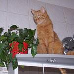 29.05.2005 - Vom Badschrank hat man den besten Blick ...