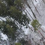 Baume - wir haben sie nicht berührt ...