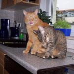 25.10.2007 - Auch meine schöne Malt-Paste muss ich jetzt teilen ...