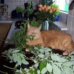 13.05.2007 - Blumen für den Muttertag - ich bin dabei ...