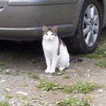 Das ist die Katze vom Nachbarhof ...