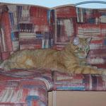 01.04.2004 - Die neue Sitzecke wurde von mir schon gründlich inspiziert ...