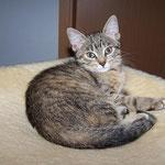 06.09.2007 - Kessy ist schon vier Wochen bei uns