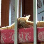 23.06.2004 - Ich genieße die wärmende Sonne auf der Truhe ...