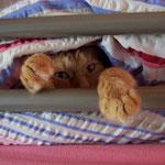 21.05.2005 - Verstecke mich heimlich in Eva's Bett ...