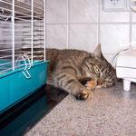 20.03.2008 - Müde geworden, beim aufpassen auf Oskar, den Hamster ...