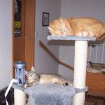 23.08.2007 - Das passt schon, jeder hat seinen eigenen Platz ...