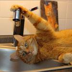 """Aus der Fotoserie """"Der Herr hat Durst"""" ..."""