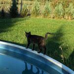 Oktober 2006 - Der Pool-Rundgang von Lucy ...