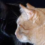 02.04.2007 - Schattenbild ...