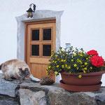Die Katzenmama am Eingang zum Haus ...