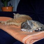 12.09.2007 - Ich werd bald Miete für die Deckennutzung verlangen ...