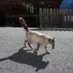 Am letzten Tag bringt uns die Katzenmama eine Maus als Geschenk mit ...