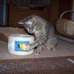 12.10.2007 - Über zwei Monate ist sie nun schon bei uns ...
