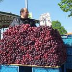 Obstverkäufer beim Blütenfest in Borthen ...