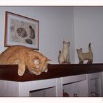 """März 2010 - Das ist der neue """"Katzenschrank"""" ..."""
