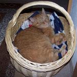 29.05.2005 - Musste raus aus dem Bett, rein ins Körbchen ...