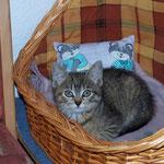 06.08.2007 - Kuscheln im Körbchen ...