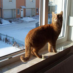18.02.2005 - Ich schaue mir an, was da weißes draußen rumliegt ...