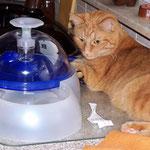 23.09.2004 - Trinken müssen Katzen viel ...