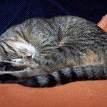 04.11.2007 - Müde Kessy ...