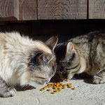 Und deutsches Katzenfütter schmeckt auch gut ...