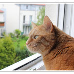 Felix schaut, ob er den Goldjungen über die Regenbogenbrücke gehen sieht ...