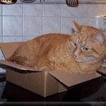 Und ist die Kiste noch so klein, der Felix der passt immer rein ...
