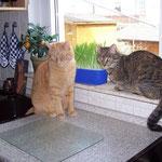 22.03.2008 - Naja, manchmal ist ein bisschen Gesellschaft auch nicht schlecht ...